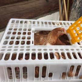 Poultry Crates, (Stocked Products), $46 & $39
